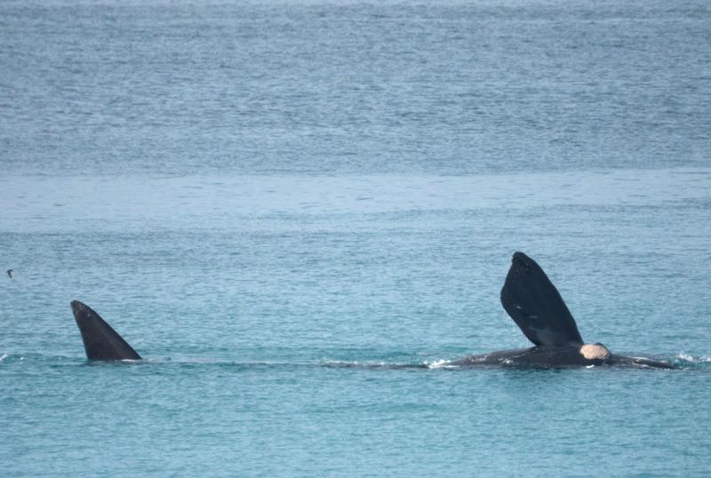 Whale-4 enhanced cropped