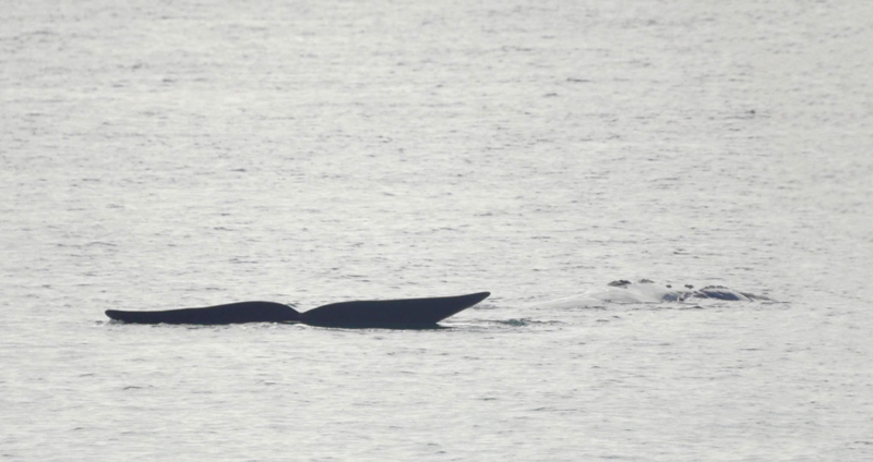 Whale Tail low res